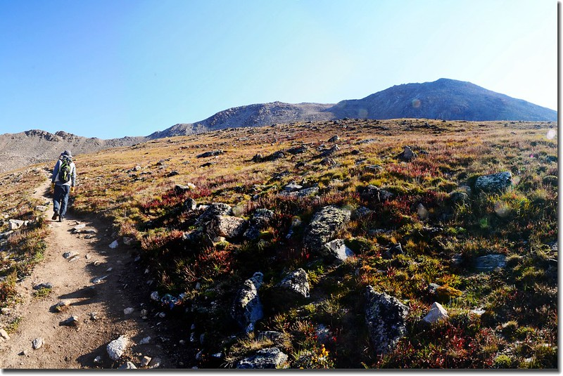 At about 12,500 feet elevation, the climb eases and crosses slopes of wildflowers 1