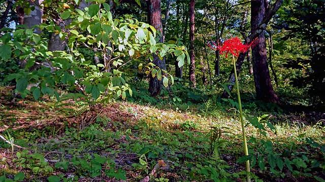 葉見ず 花見ず 仏の花