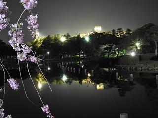 千葉公園綿打池 夜桜ライトアップ18