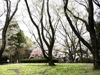 泉自然公園 19 空中に根を張っているよう