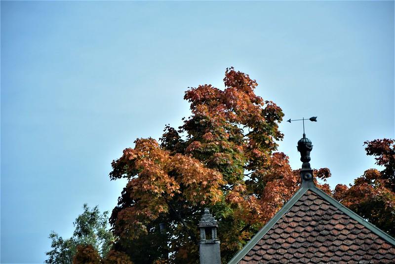 Autumn 29.09 (2)