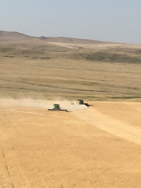 High Plains Harvesting - Mark 2017