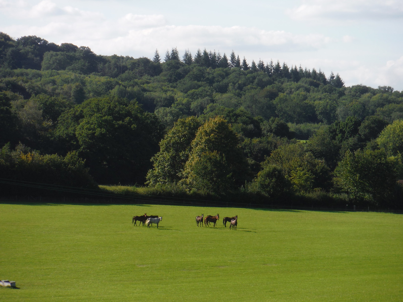 Horses in Field, near Snapelands Copse SWC Walk 294 - Pulborough to Halfway Bridge (via Tillington)