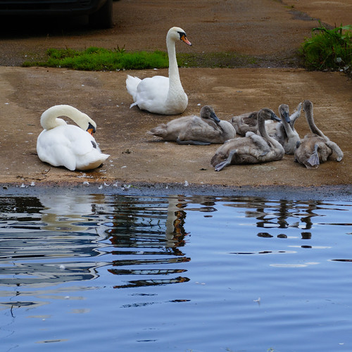 Swan family, Oxley Marine slipway