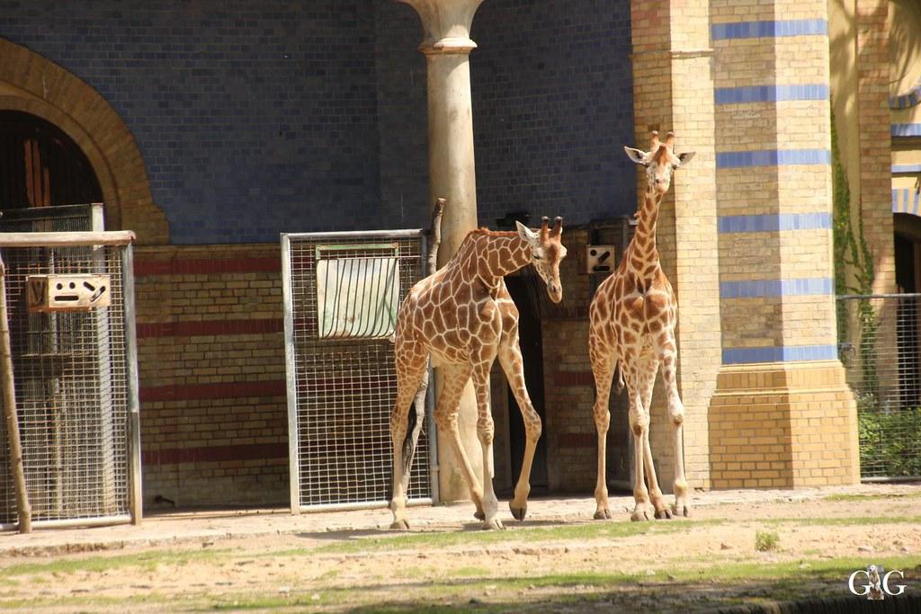 Besuch Zoo Berlin 20.07.201724