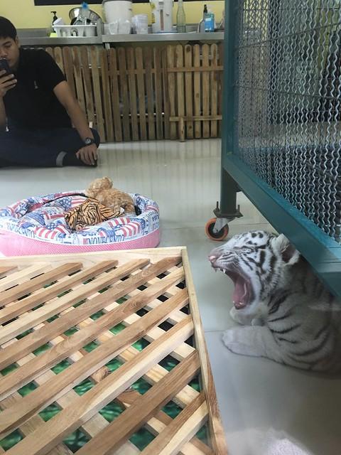 Tiger kingdom ?, Apple iPhone 6s Plus, iPhone 6s Plus back camera 4.15mm f/2.2