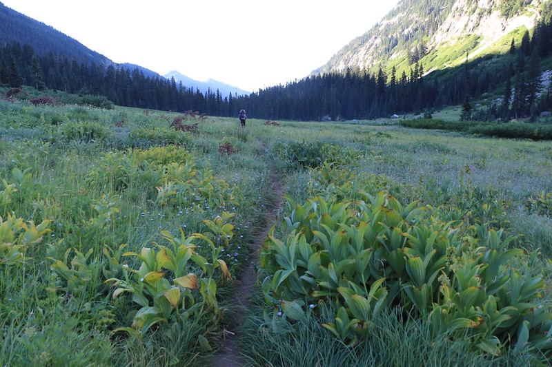 Peaceful hiking downhill in Spider Meadow