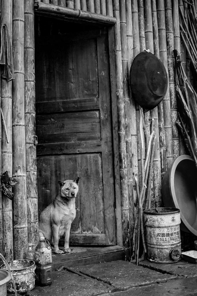 P2-门边的狗。