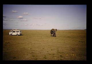 Safari = サファリ