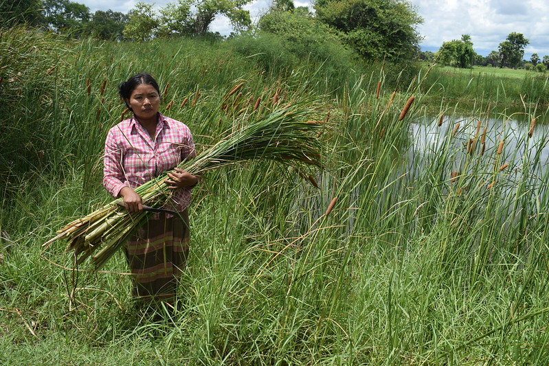 Hnin Nu Moe cleaning grass near the pond, Myanmar. Photo by Swan Yee Htet, 2017.