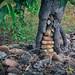 Small photo of La nogal y las piedras
