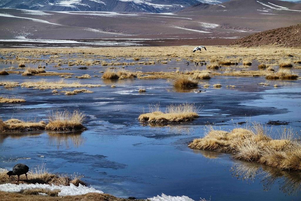 San Pedro Atacama - Geysers del Tatio - Lagune 4