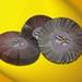 Flexovit-lamellslipskivor-Produkt-1