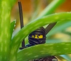 Beware the Ninja