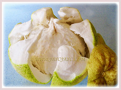 Opened ripen fruit of Citrus maxima (Pomelo, Pomello, Pummelo, Limau Bali/Besar in Malay), 24 Sept 2017