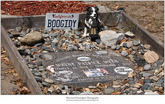 Boogidy