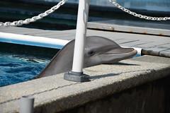 Marine Life Oceanarium Cover Photo