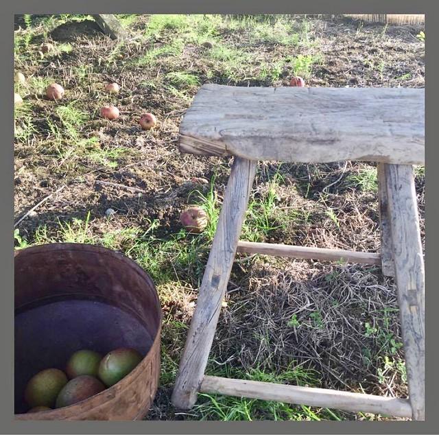 Krukje mand met appels