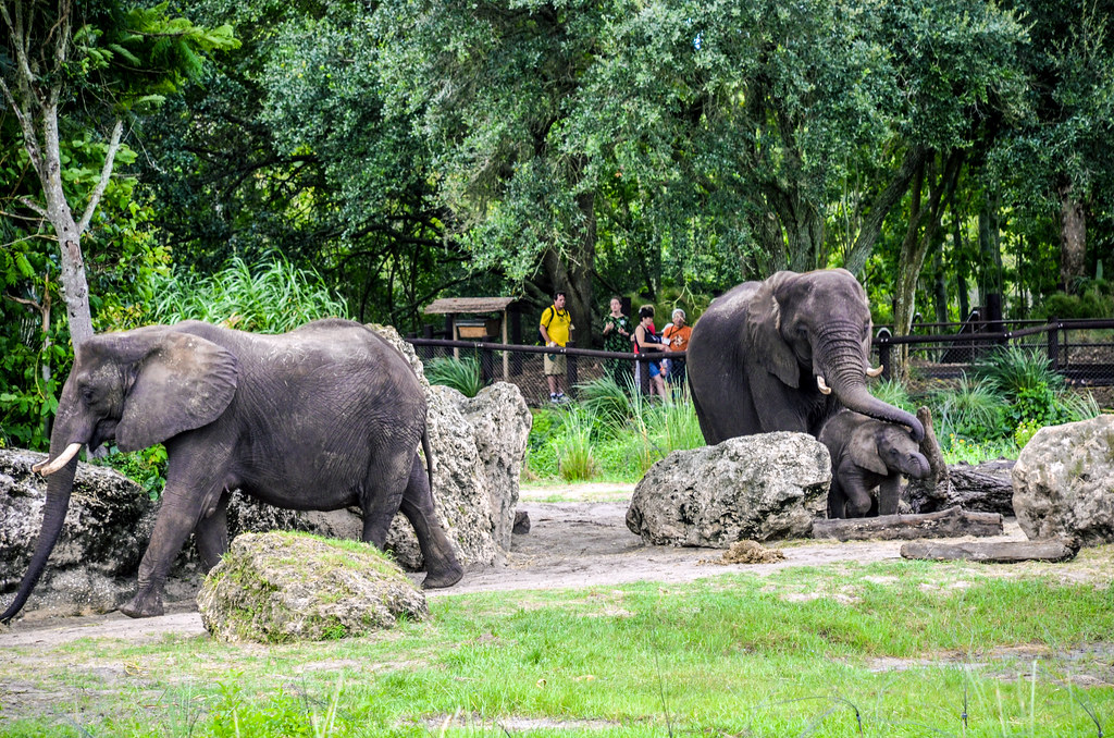 Elephants WAT AK