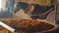 horse and fermenting agave