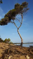 Presqu'île de Giens Est