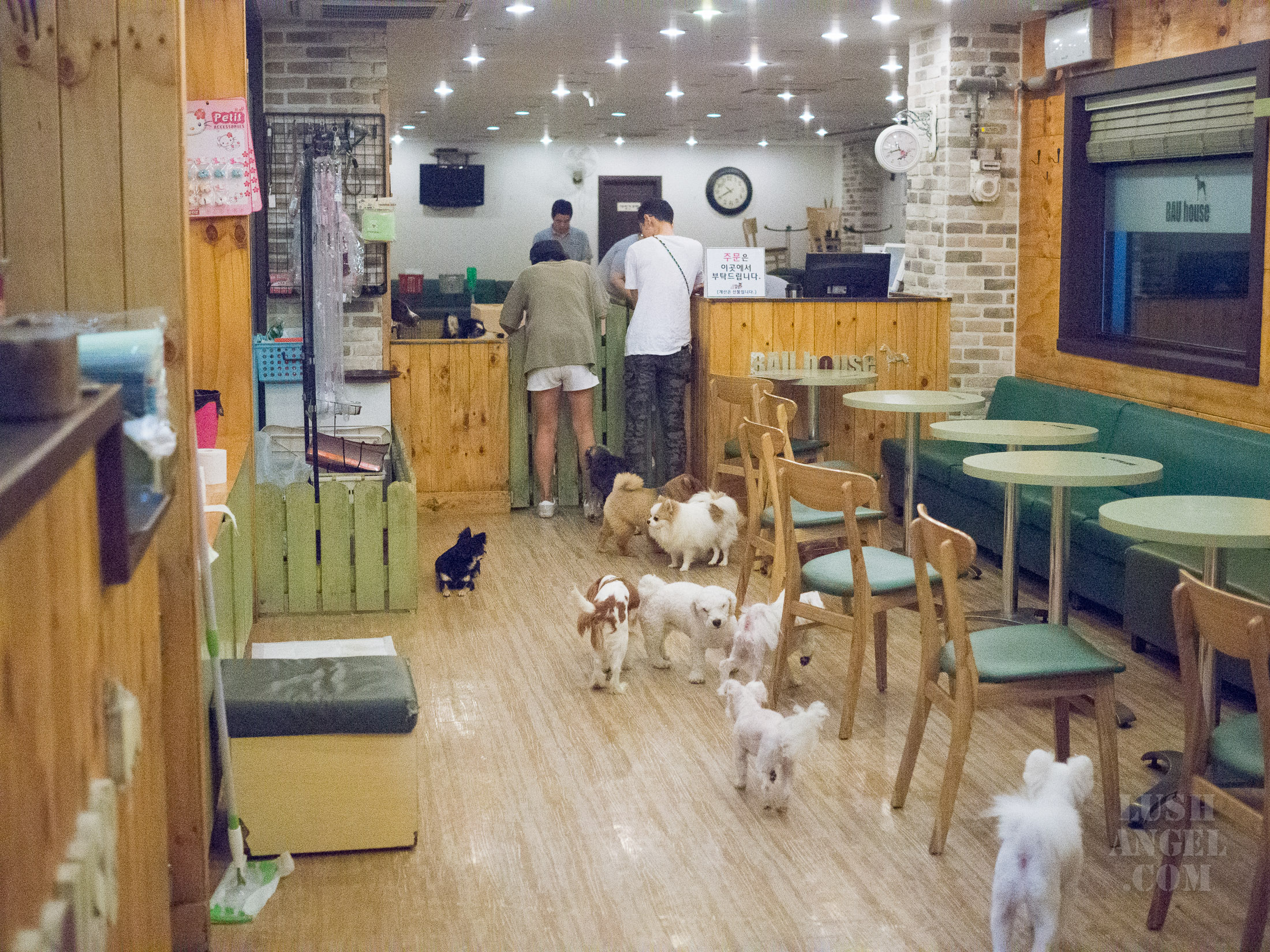 bau-house-dog-cafe