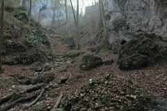 Ruine Fürstenstein_Herbst_04
