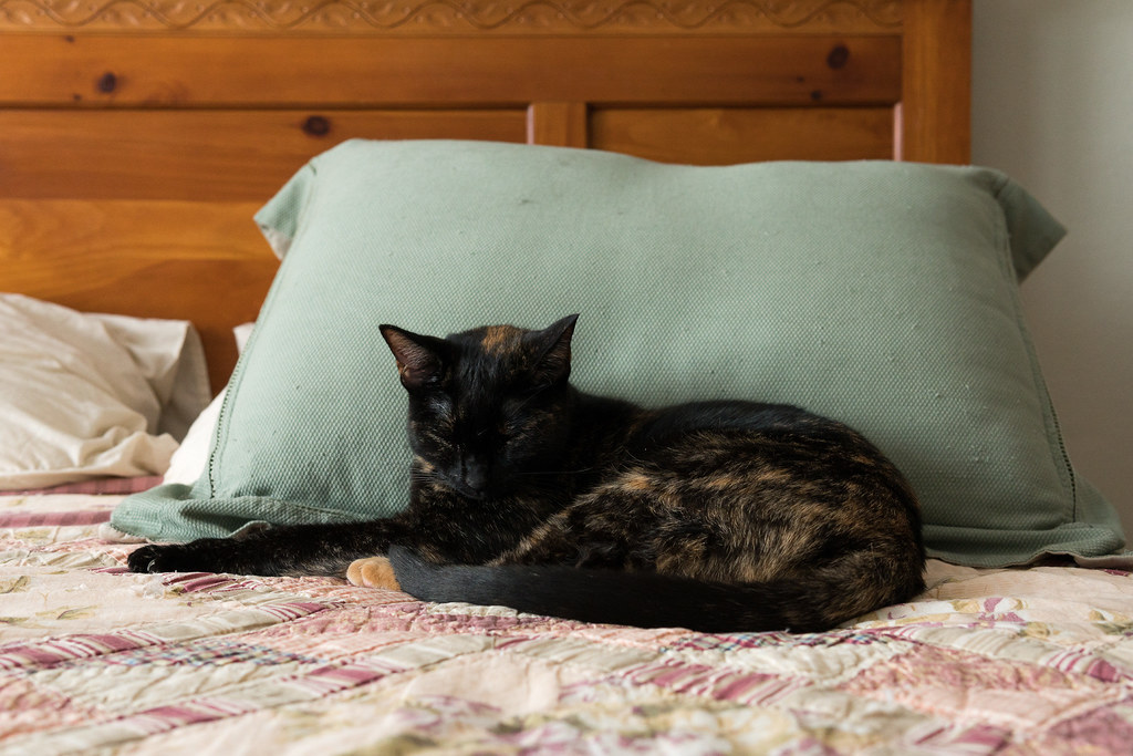 Our smallest cat Trixie sleeps on the guest bed