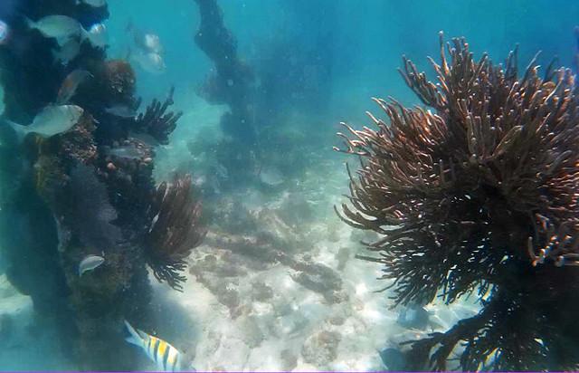 fish-scene-snorkel