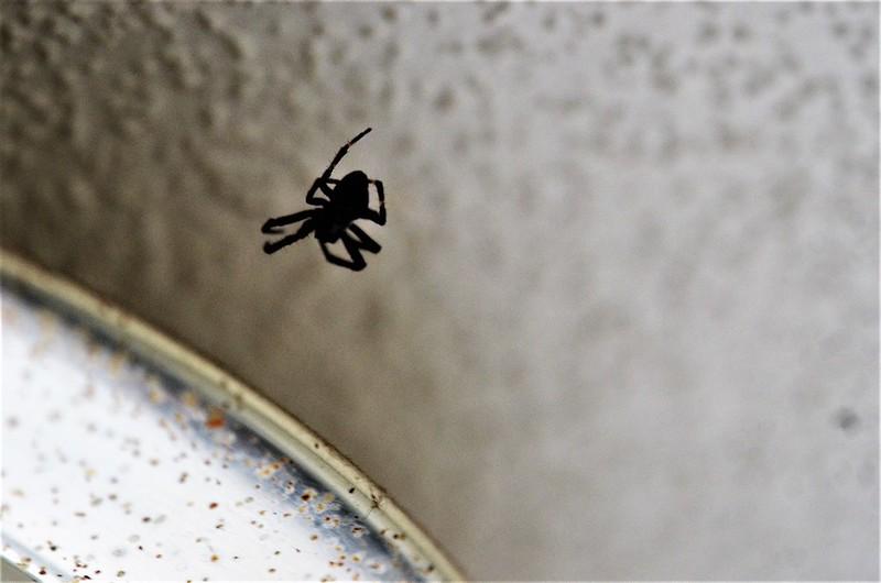 Spider 19.09.2017