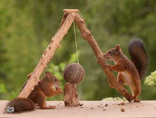 squirrels and a iron ball with  a crashed nut