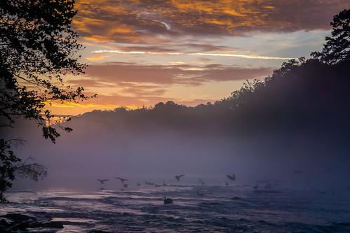 morningroutine atl atlanta jonesbridge localparks parks geese fog