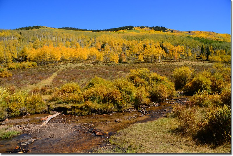 Fall colors, Kenosha Pass  (38)
