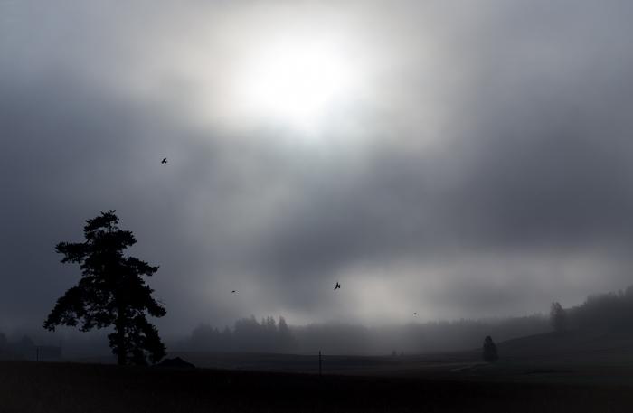 syksy mv mustavalkoinen mustavalko black and white simple maisema sumuinen sumu aamulla  (1 of 1)