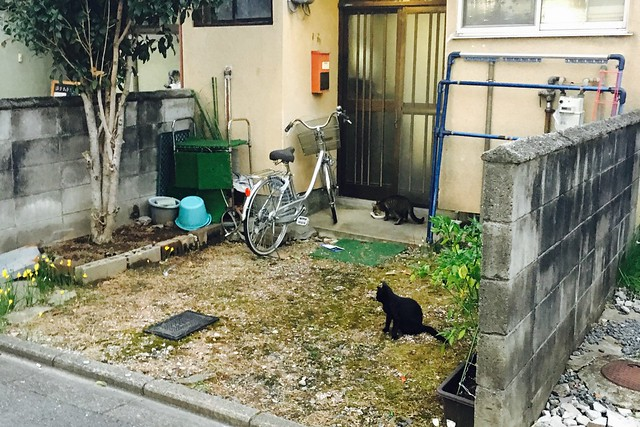 Today's Cat@2017-09-17