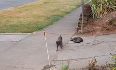 cat buddies03