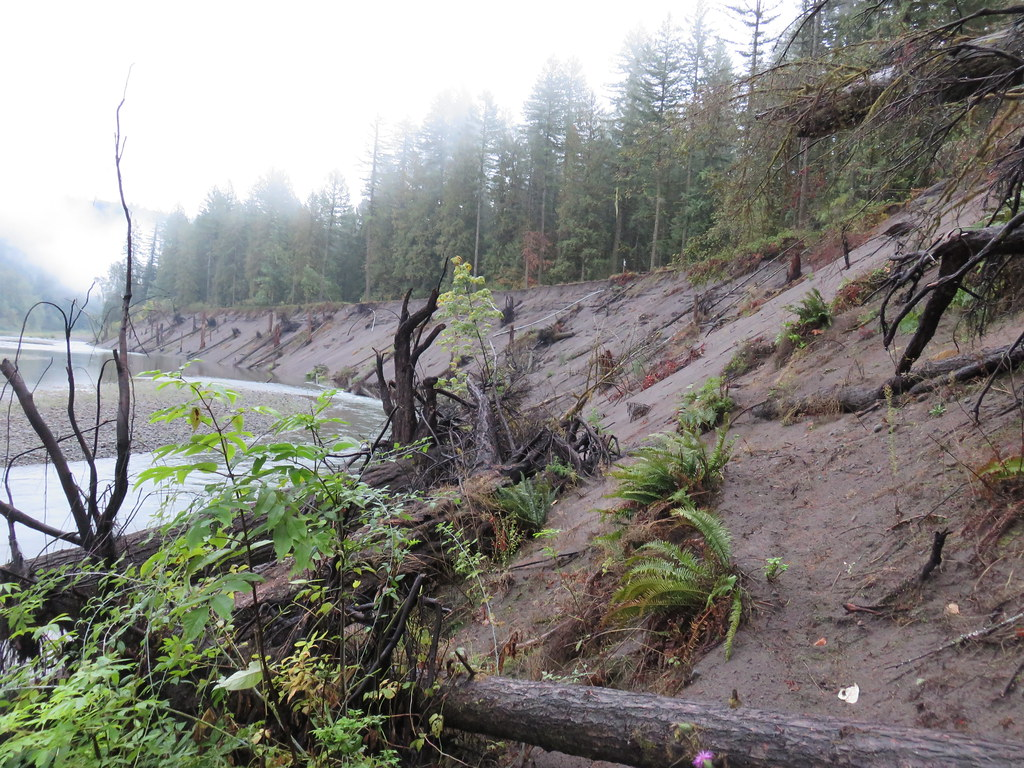 Eroded bank of the Sandy River