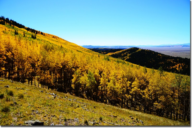 Fall colors, Kenosha Pass  (29)