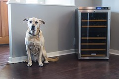 dog in dining room with wine cooler