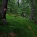 Day 2: Rainy woods near Alpe dell'Oro