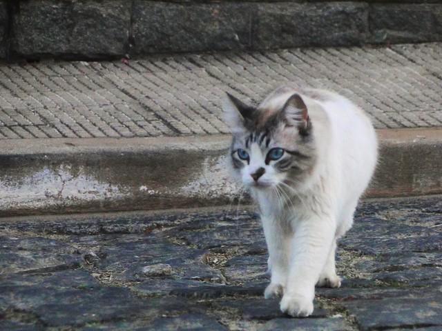 Gato do vizinho