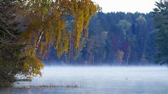 Lake Alice Loon