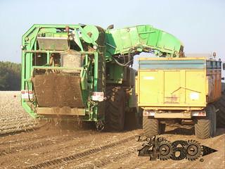 Avr Solanum-038