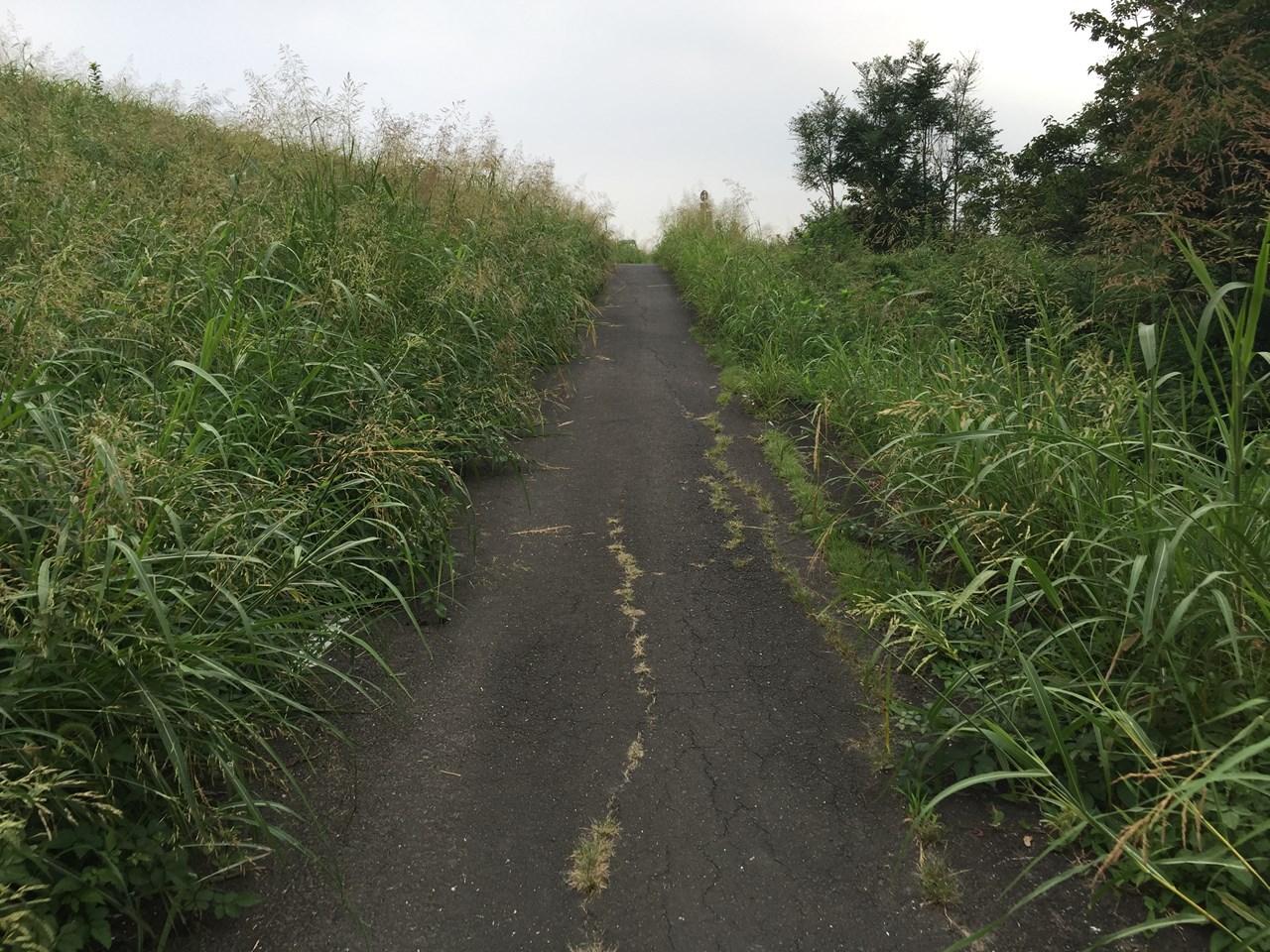 20170826_Arakawa Long Run (6)