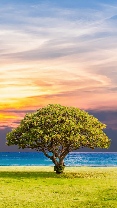 Tree Sea Grass Nature IPhone 8 Wallpaper