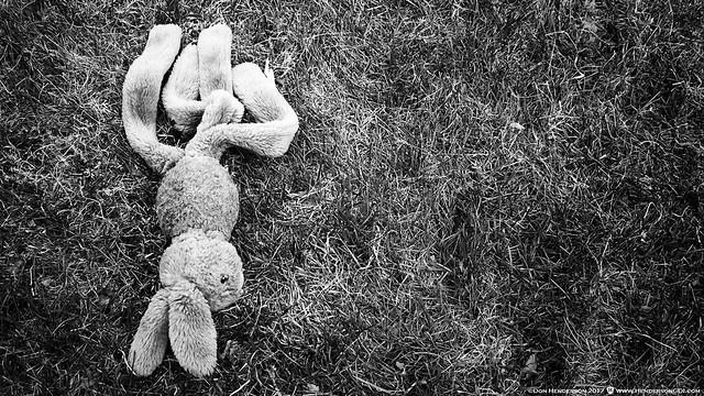 Dead Rabbit, Fujifilm FinePix S200EXR