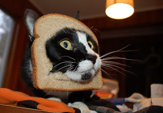 cat%20breading%20photo%20courtesy%20of%20breadedcat.com_zpsz26qare9