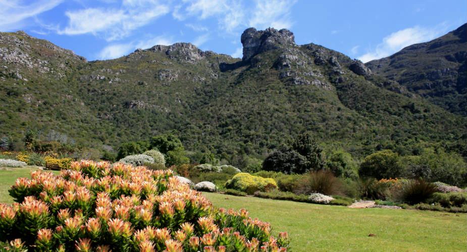Genieten in het groen in Kaapstad, Zuid-Afrika: Kirstenbosch Gardens | Mooistestedentrips.nl