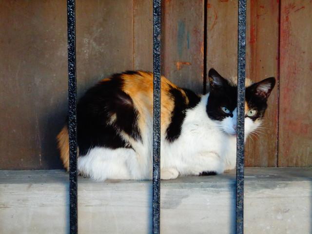 Cat ♥, Sony DSC-W630