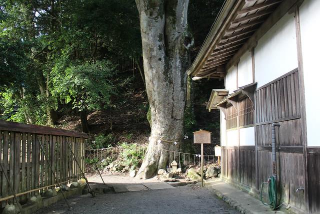 niukawakami_simo010